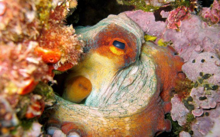 Spettacolari esperienze di immersione all'isola di Cavallo